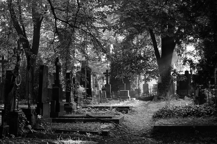 Image result for hřbitov OLŠANY černobílé